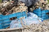 Action Day – FISHERY 2: Peste 1,3 tone de pește fără documente legale, 1.000 de unelte de pescuit și 6 ambarcațiuni au fost confiscate, în urma unei acțiuni de o zi.