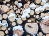 Cercetat pentru tăiere ilegală de arbori și furt de material lemnos