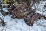 Patru români au furat aproape un kilometru de cablu lăsând mai multe orașe din Spania fără servicii de telefonie și internet în plină furtună de zăpadă