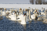 Ziua Mondială a Vieții Sălbatice: Peste 40 de branduri internaționale și 15 branduri din România renunță temporar la speciile de animale și plante din logo