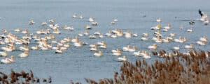 Danube-Delta-wildlife-03