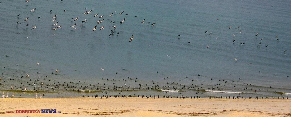 plaja-salbatica